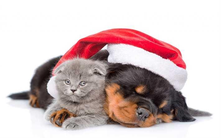 Veg-Up per gli amici pelosi… questo Natale regaliamo cibo, coperte e amore.